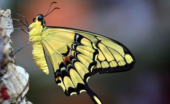 butterfly garden dubai photo