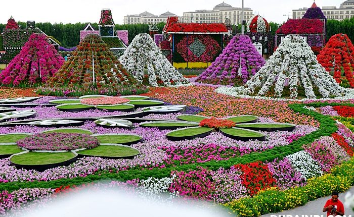 dubai miracle garden photo (1)