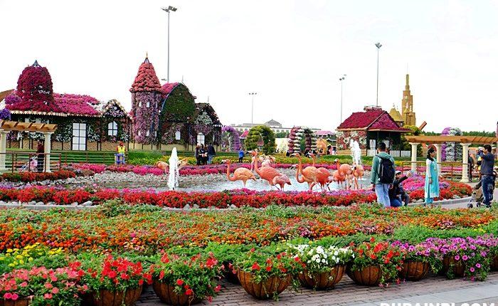 dubai miracle garden photo (3)