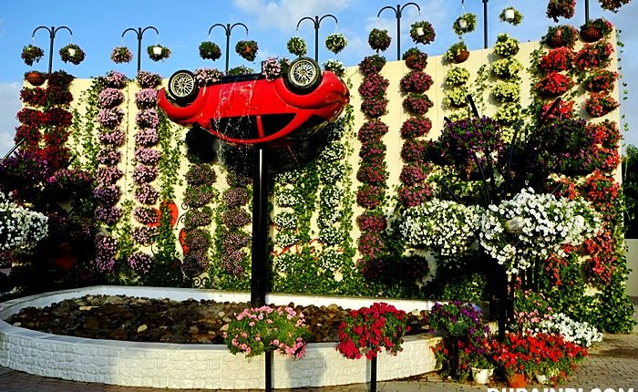 dubai miracle garden photo (4)