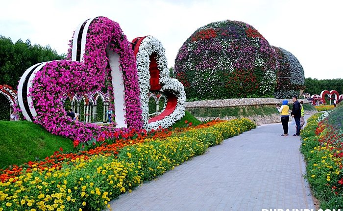 dubai miracle garden photo (7)
