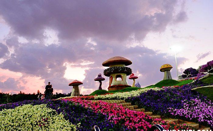 dubai miracle garden photo (8)