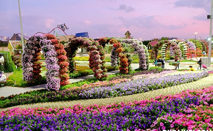 dubai miracle garden photo (9)