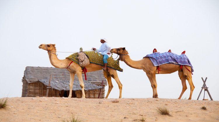 camel-ride-uae